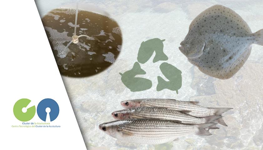 Portada Fishfloc