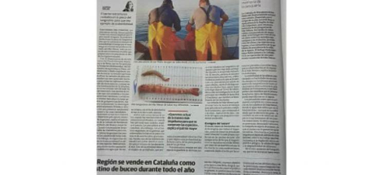 Asesoramiento para la Sostenibilidad Ambiental de la pesca del langostino