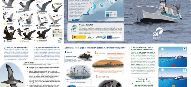 Láminas aves-pesca