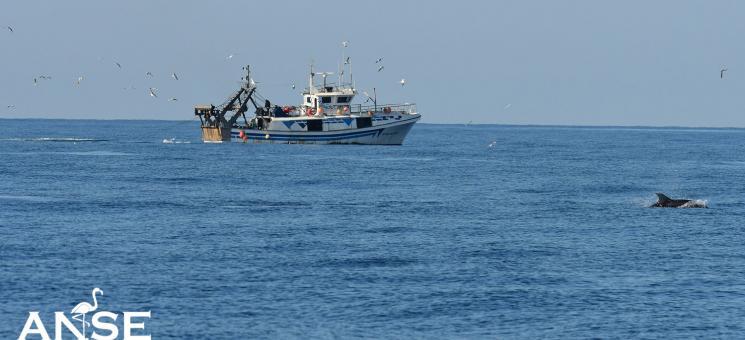 Delfín mular junto a barco pesquero de arrastre