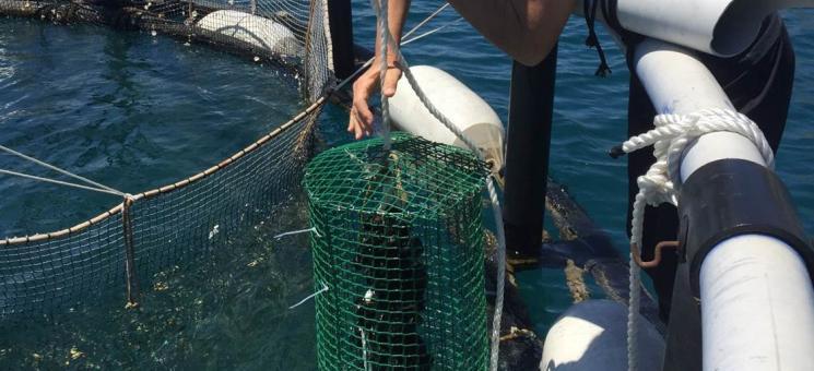 Formulario con el objetivo de recabar información del sector de la acuicultura marina, en especial en prevención y reducción, monitoreo y cuantificación, y reciclado y eliminación de residuos plásticos