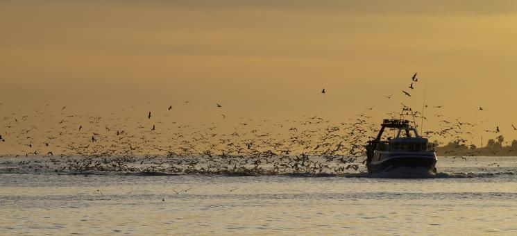 Barco de pesca seguido por aves