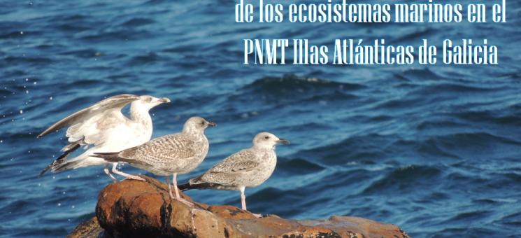 II Red para la recuperación de los ecosistemas marinos en el PNMT Illas Atlánticas de Galicia