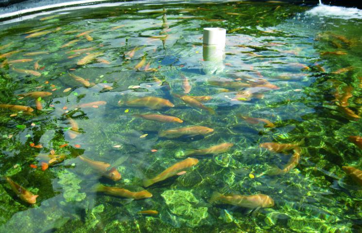 VALACUI acuicultura Azti PTEPA