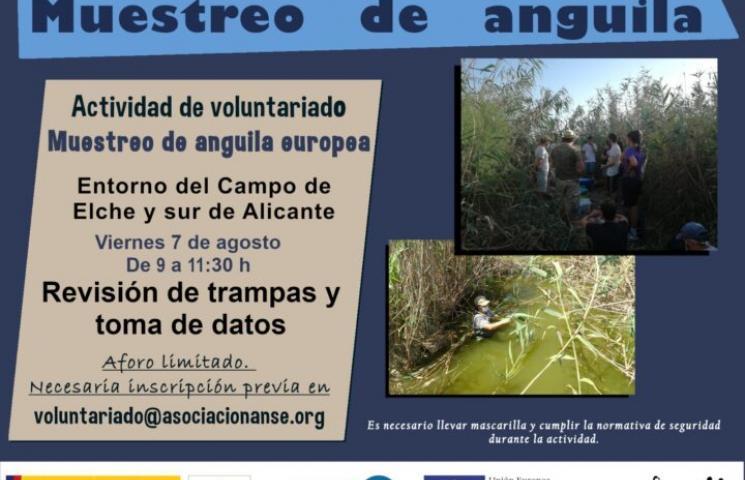 Cartel voluntariado anguila