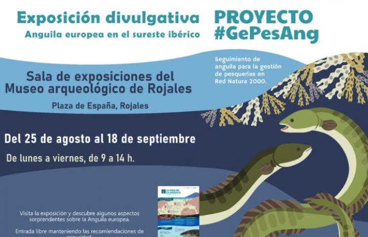Exposición sobre la anguila en Rojales