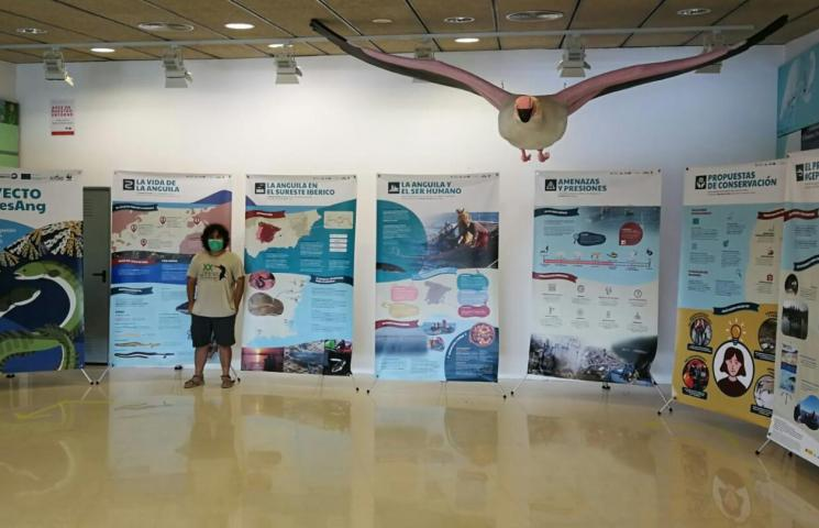 Exposición Proyecto GePesAng en la sala del Punto de Información del Parque Natural de El Hondo de Elche. Imagen: ANSE(c)