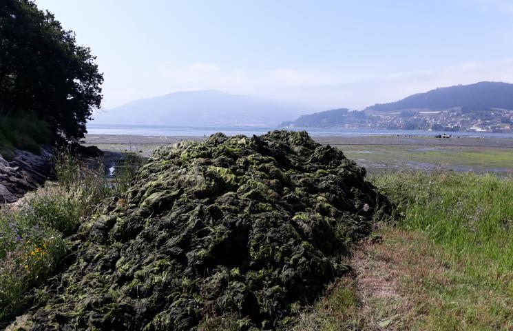 Acumulación de las algas