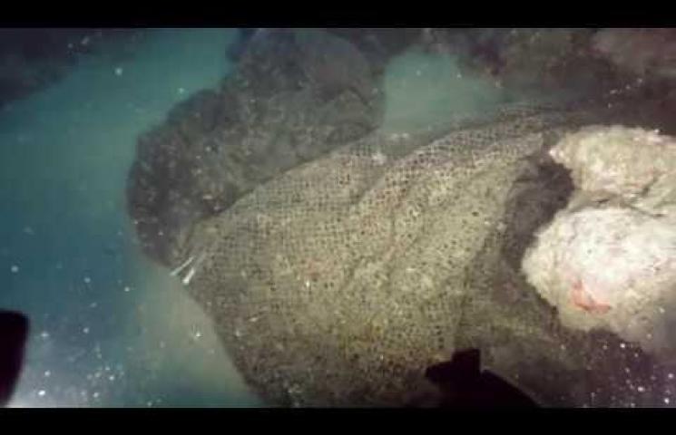 Vídeo que refleja el trabajo realizado en la campaña de extracción de aparejos de pesca perdidos realizada en Cataluña en 2019.